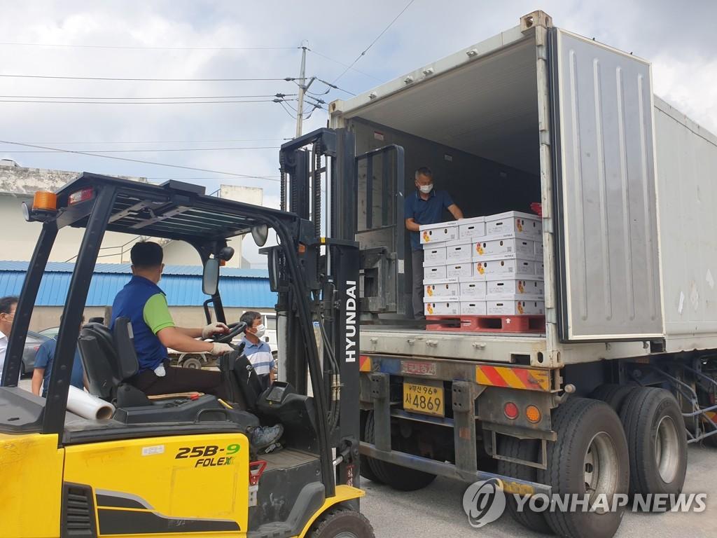 韩国产彩椒正式对华出口